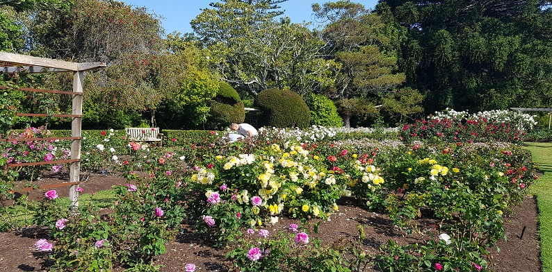 things to do in Auckland CBD