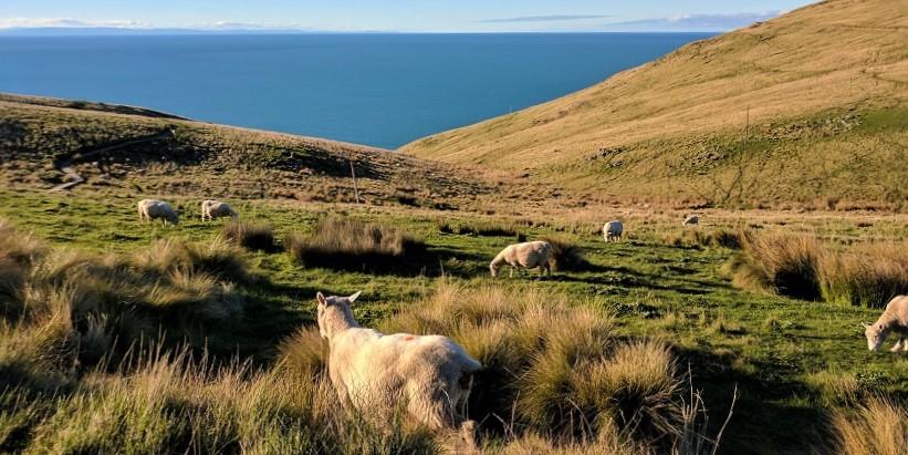 Best views over Christchurch