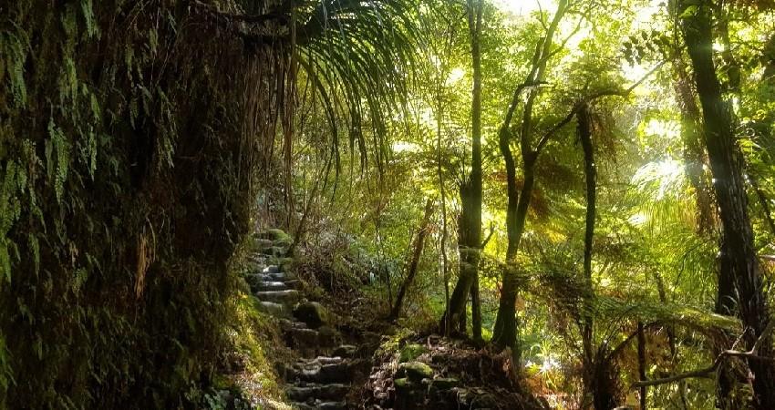 Best free Walks in Coromandel Forest Park, New Zealand