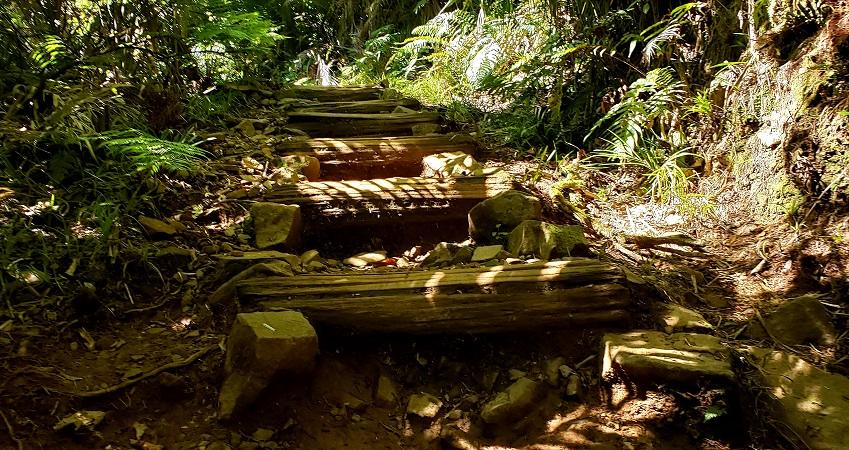 The Pinnacles trail in Coromandel